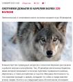 Безымянный волки.png