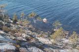 3.. Моржи в Белом море исчезли еще в 15 веке. Человек их погубил. Моржовые клыки считались величайшей драгоценностью - ну как слоновая кость....JPG