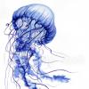 ВИДЕООБЗОРЫ ПАРУСНЫХ ЯХТ - последнее сообщение от Meduza